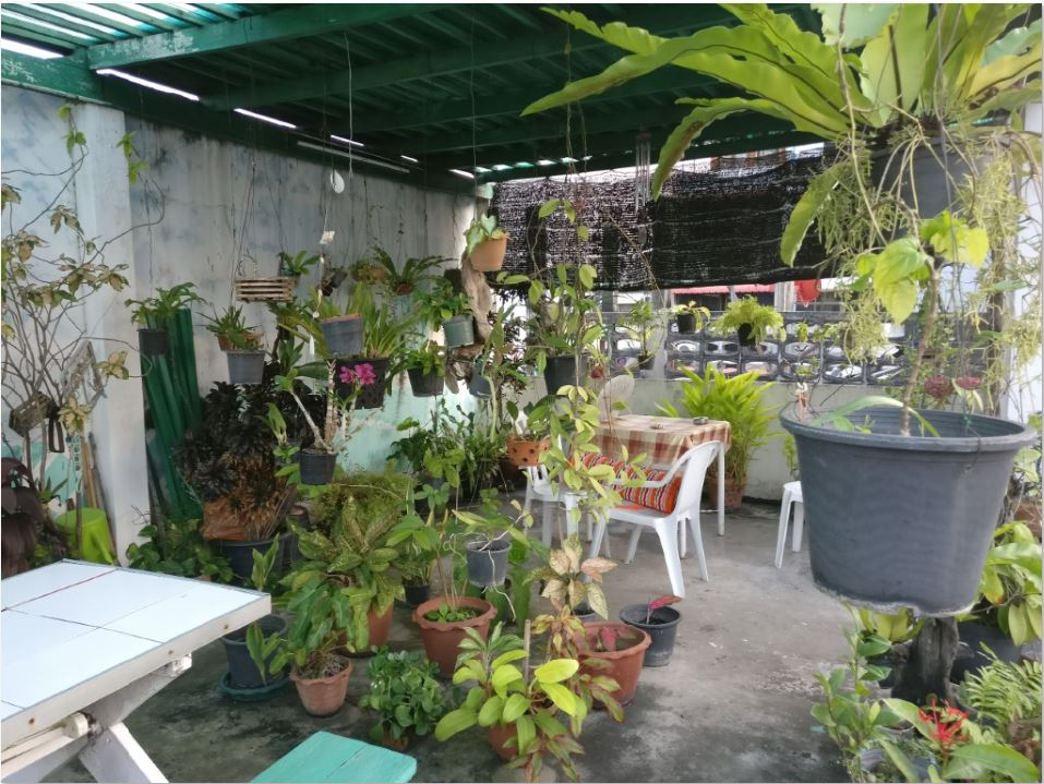 Many potted plants on a rooftop