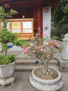 Small tree with pink flowers