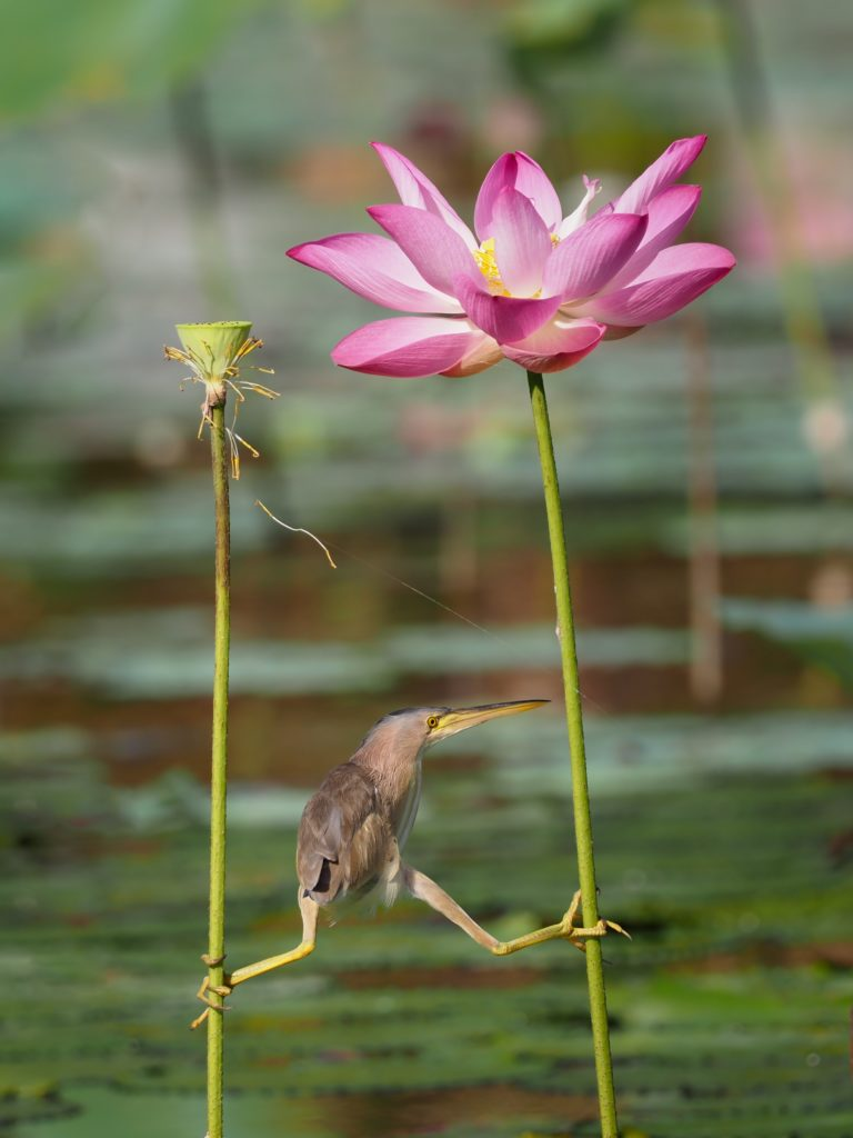 bird balancing between two flowers